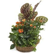oranje-plantenmix